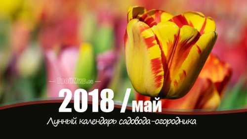 лунный календарь стрижек 2017